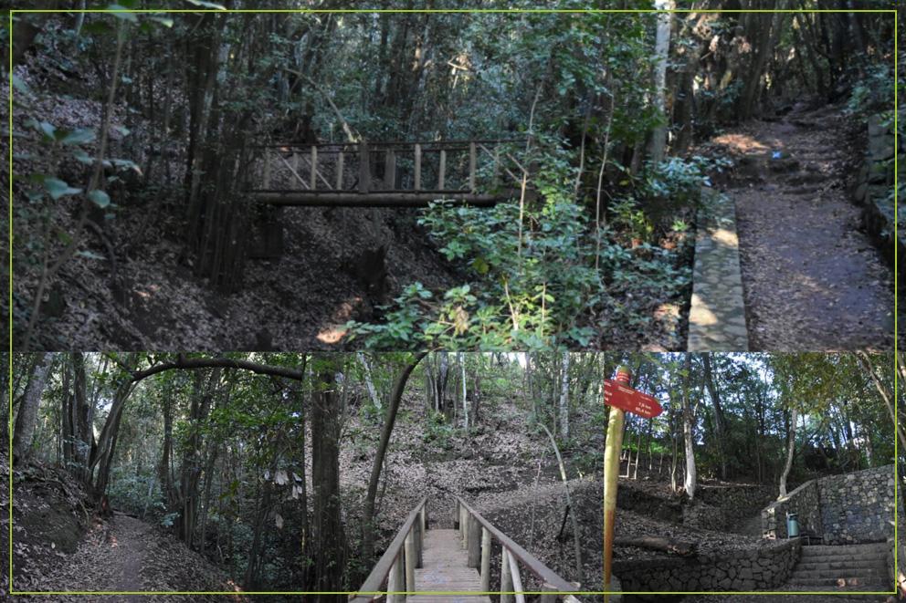 Bosque del Adelantado-OK