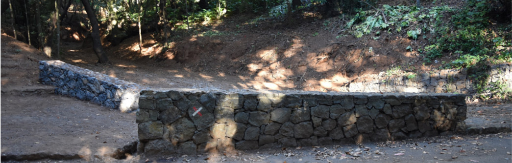 barranco-bosque-adelantado-1