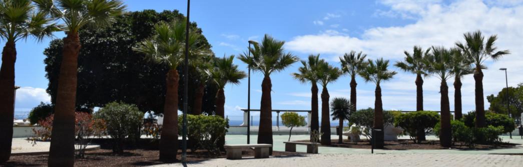 poda-palmeras-plazas-radazul-1