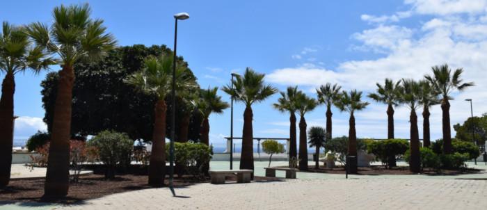 poda-palmeras-plazas-radazul-2