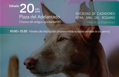 expo-perros-caza-3