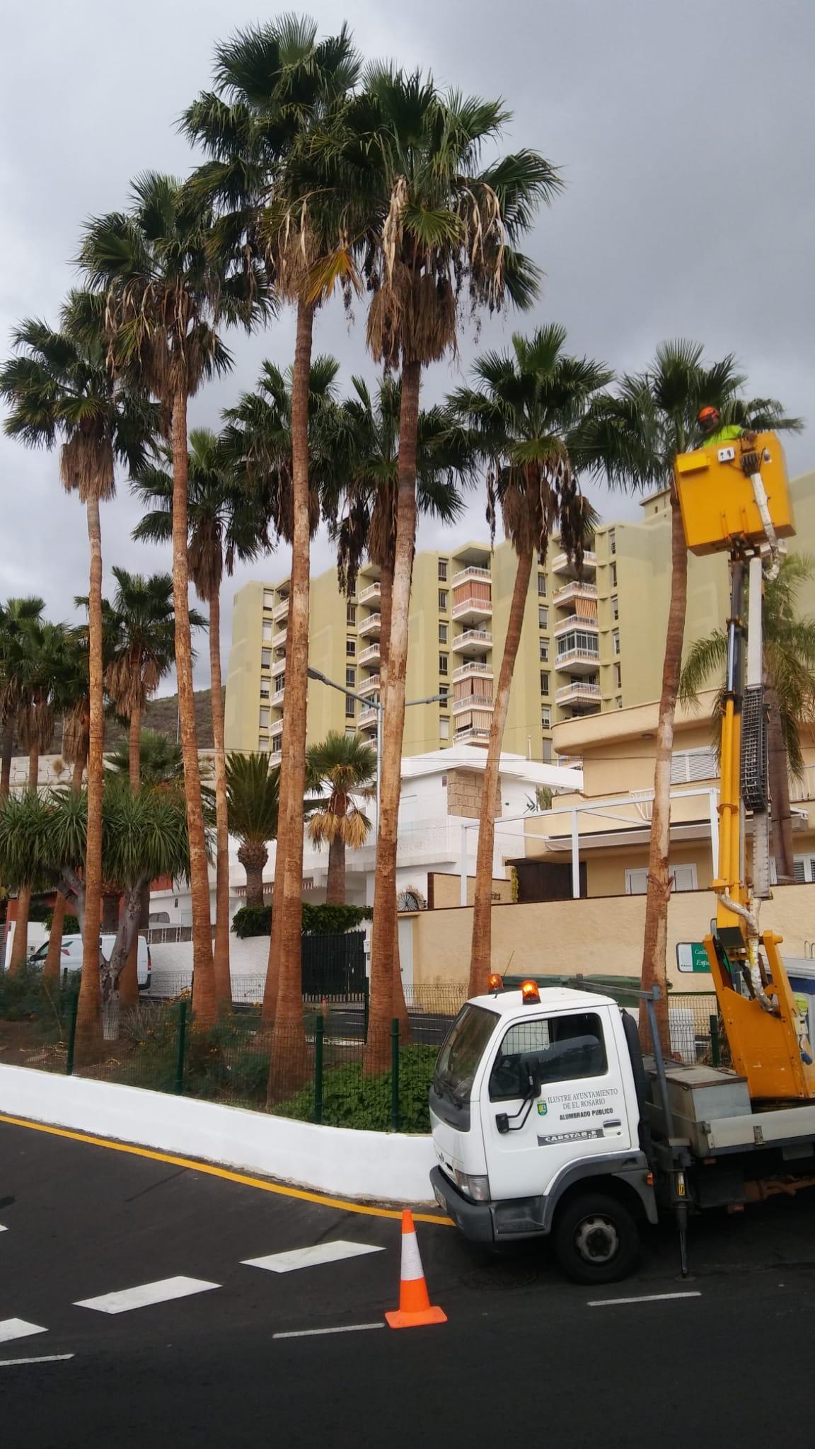 Poda palmeras Radazul-Tabiaba (2)