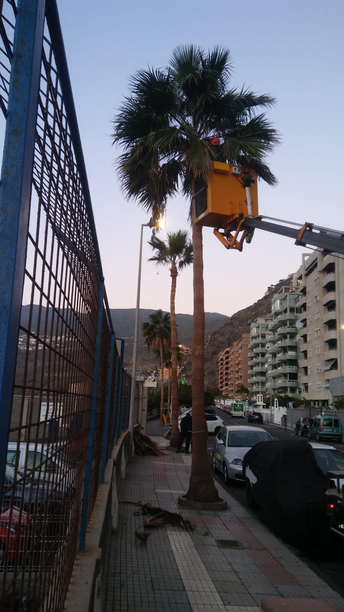 Poda palmeras Radazul-Tabiaba (4)