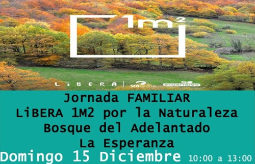erradicacion-flora-bosque-3