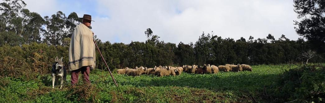 pastor-ovejas-laesperanza-1