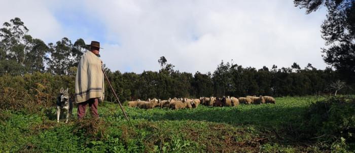 pastor-ovejas-laesperanza-2
