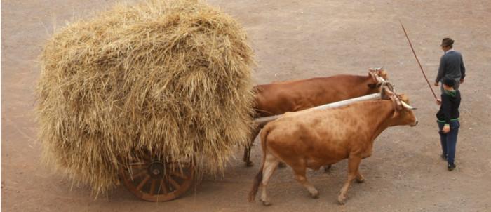 ayudas-ganaderos-20-2