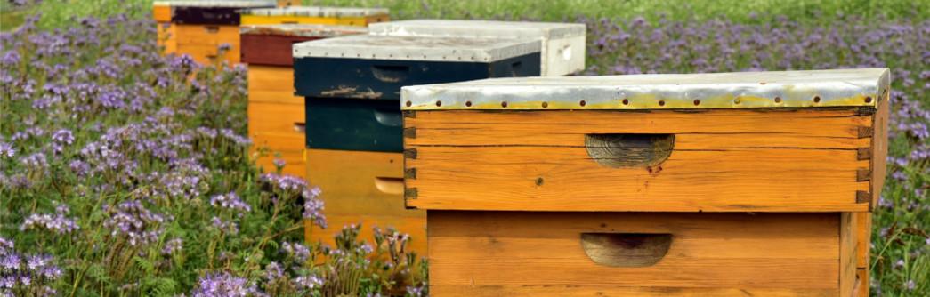 ayudas-apicultura-2020-1