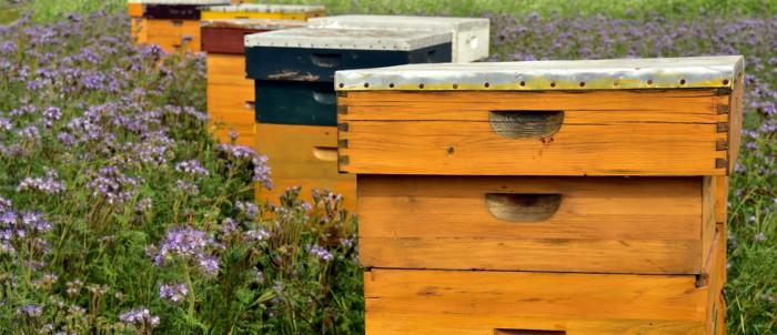 ayudas-apicultura-2020-2