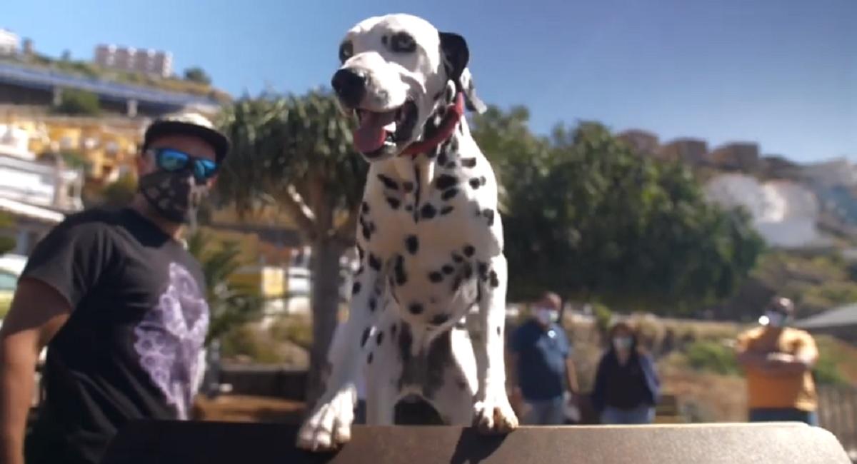 parque-perros-video