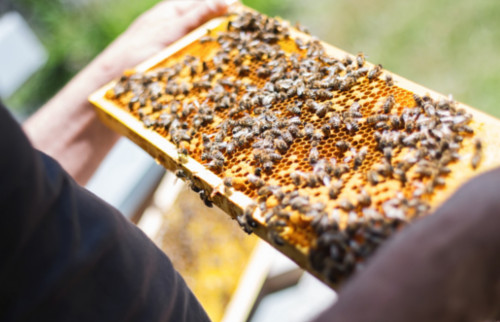 ayuda-apicultura-2021-3